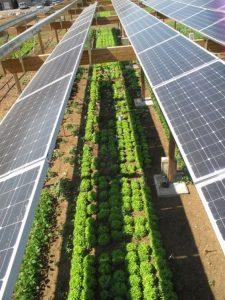 کشاورزی خورشیدی
